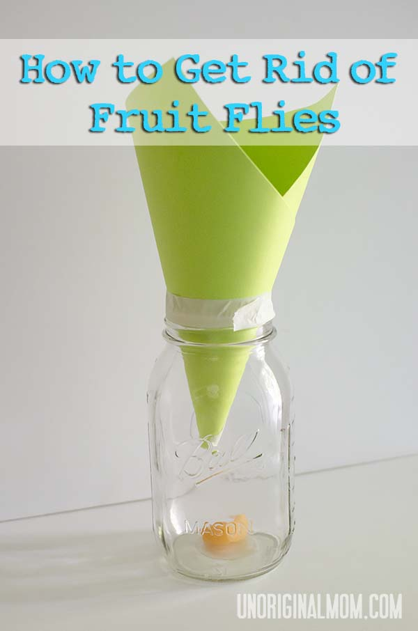 How to Get Rid of Fruit Flies  |  unOriginalMom.com